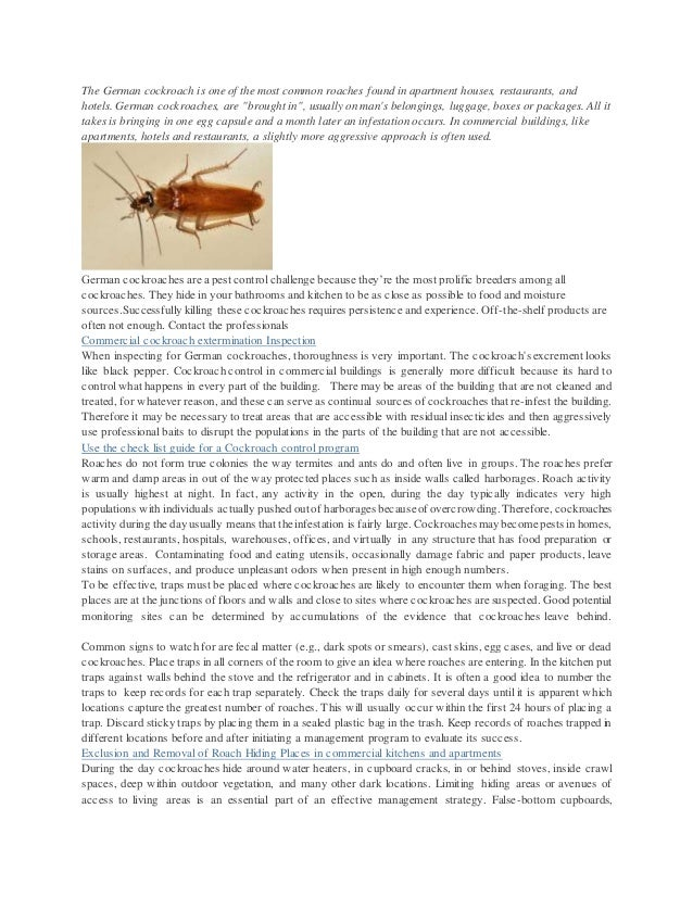 The German cockroach is one of the most common roaches found in apartment houses, restaurants, and hotels. German cockroac...