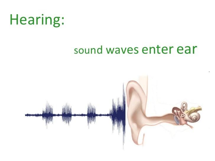 Hearing:   sou n d   w a v e s   e n t e r   e a r