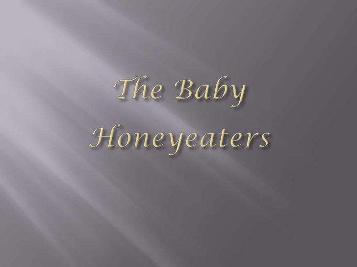 The Baby Honeyeaters<br />