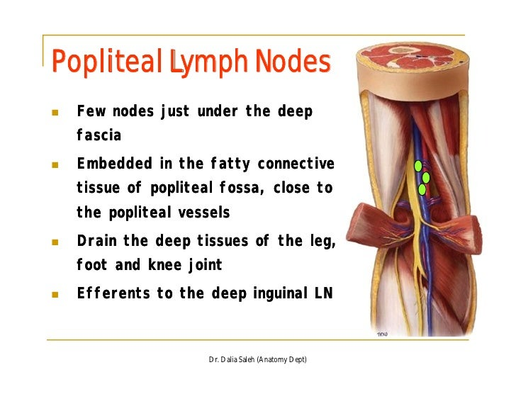 lymph nodes in back | Search Results | United States News ...