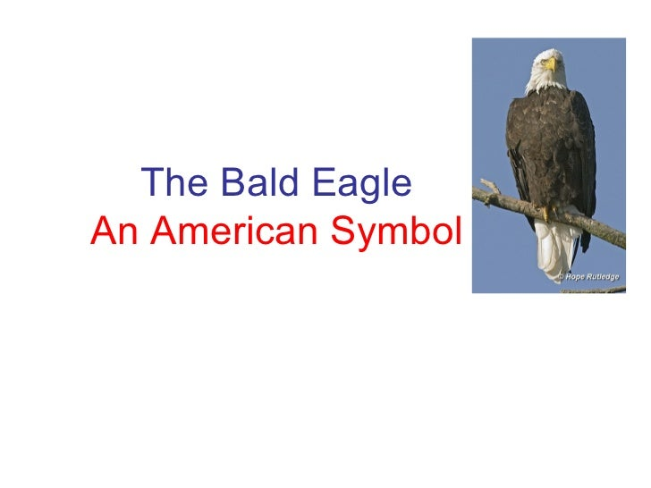 The Bald Eagle An American Symbol