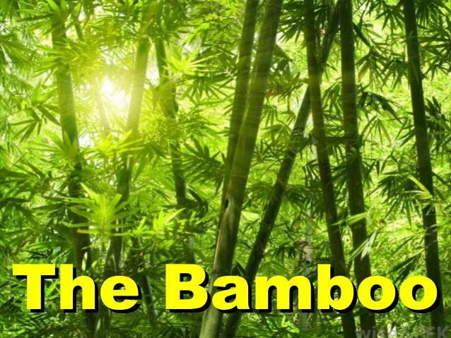 The BambooThe Bamboo