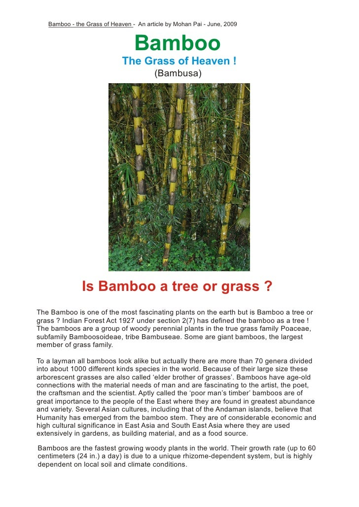 pliant like a bamboo essay The bamboos /bæmˈbuː/ ( about this sound listen) are evergreen perennial  flowering plants  bamboo, like true wood, is a natural composite material with  a high strength-to-weight ratio useful for structures in its natural form, bamboo as  a.