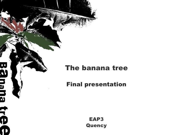 The banana tree EAP3 Quency Final presentation