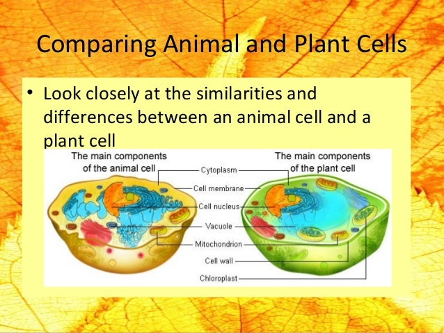 The basic structure and function of cells 22 comparing animal ccuart Gallery