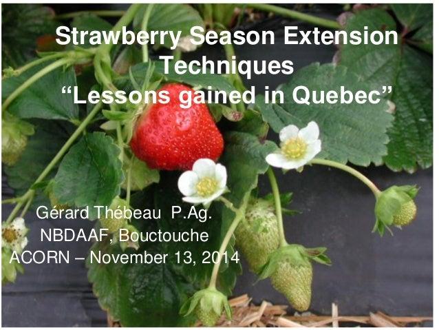 "Strawberry Season Extension Techniques ""Lessons gained in Quebec"" Gérard Thébeau P.Ag. NBDAAF, Bouctouche ACORN – November..."
