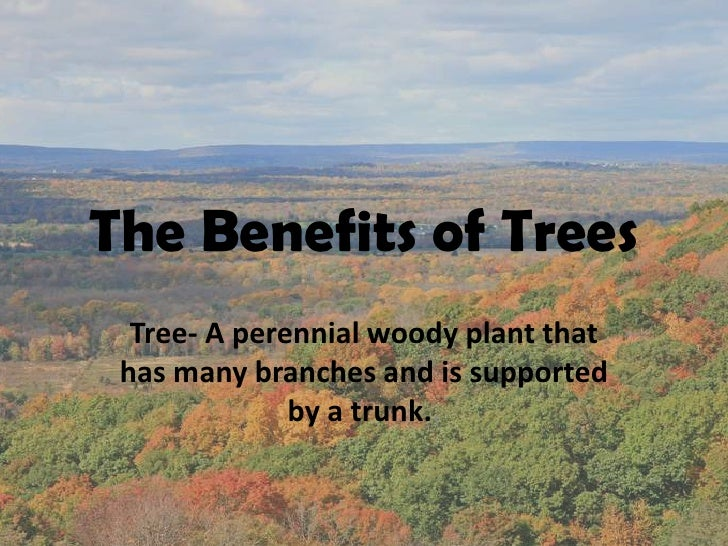The Benefits of Trees   Tree- A perennial woody plant that  has many branches and is supported               by a trunk..