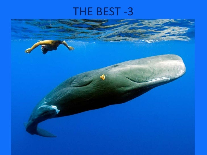 THE BEST -3<br />