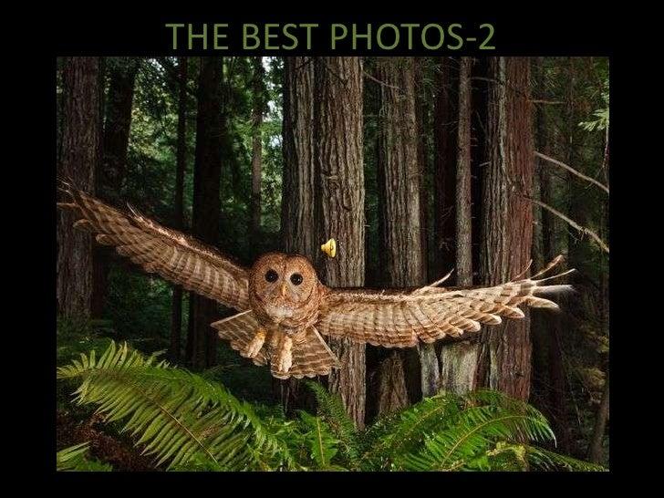 THE BEST PHOTOS-2<br />
