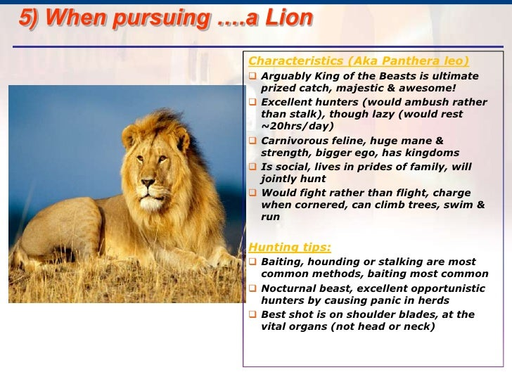 African Lion Fact Sheet