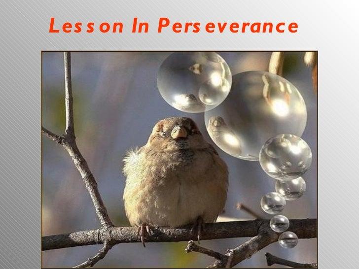Lesson In Perseverance