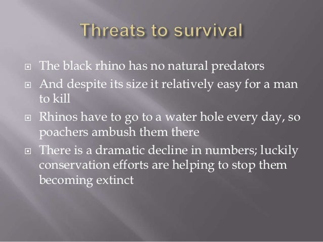 The black rhino pro