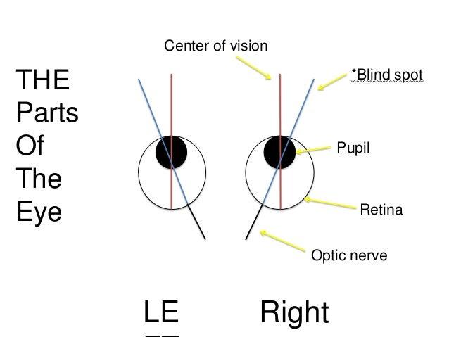 Eyesight blind spot diagram electrical wiring diagram the blind spot rh slideshare net eye diagram blind spot motorcycle blind spot diagram ccuart Images