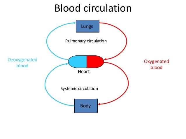 The blood circulatory system IGCSE