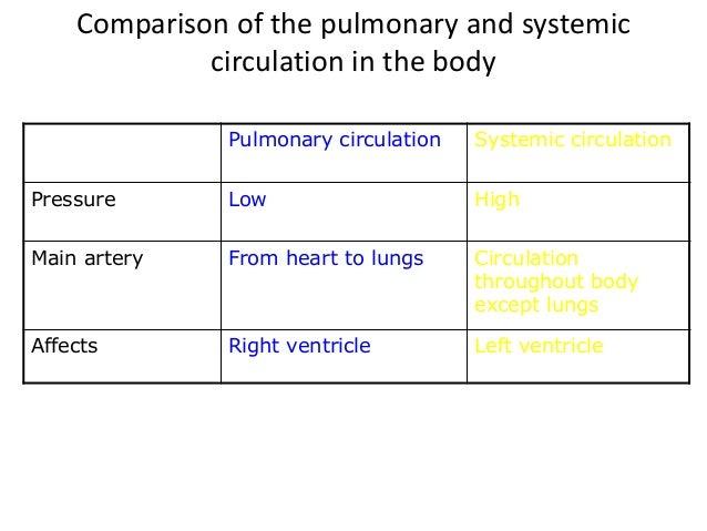 Free Worksheets pressure conversion worksheet : The blood circulatory system IGCSE