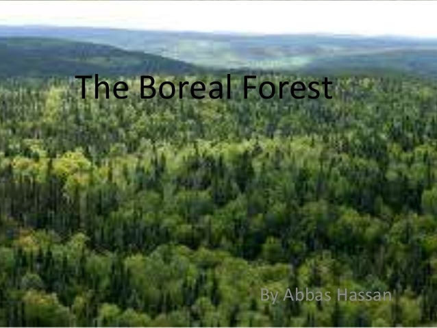 The Boreal Forest  By Abbas Hassan
