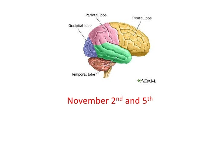 The BrainNovember 2nd and 5th