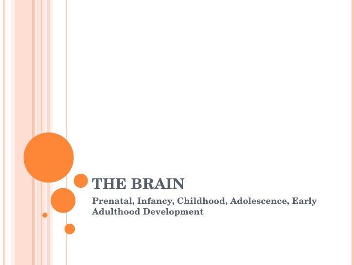 THE BRAIN Prenatal, Infancy, Childhood, Adolescence, Early Adulthood Development