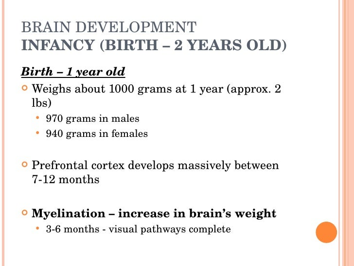 BRAIN DEVELOPMENT INFANCY (BIRTH – 2 YEARS OLD) ...