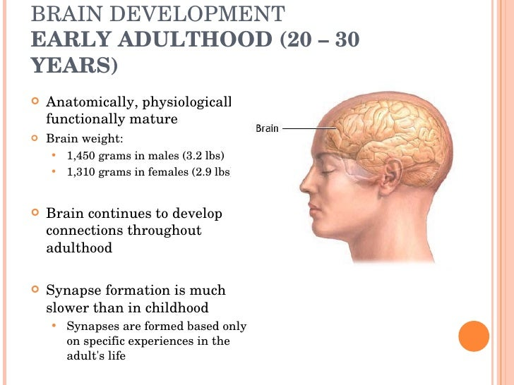 development timeline birth to 19 years Human development is the process of growing to maturity  (sperm fertilizes egg – birth)  typically 0-11 years) neonate (newborn) (0–28 days.