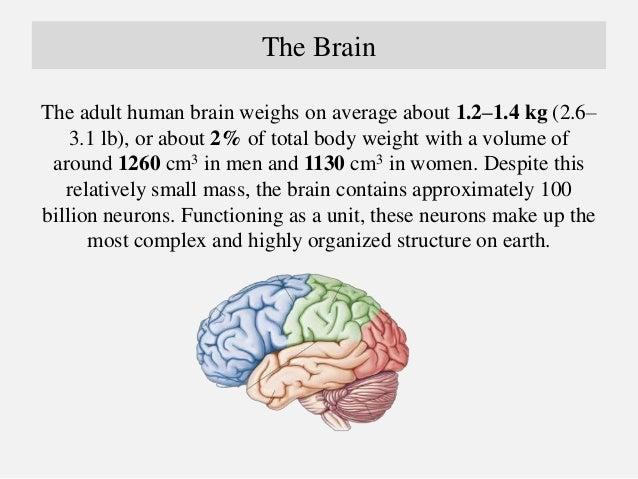 The Brain Anatomy by Dr Arman Hossain  Slide 3