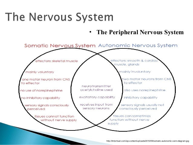Central Nervous System Vs Peripheral Nervous System Venn Diagram