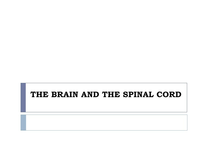 THE BRAIN AND THE SPINAL CORD<br />