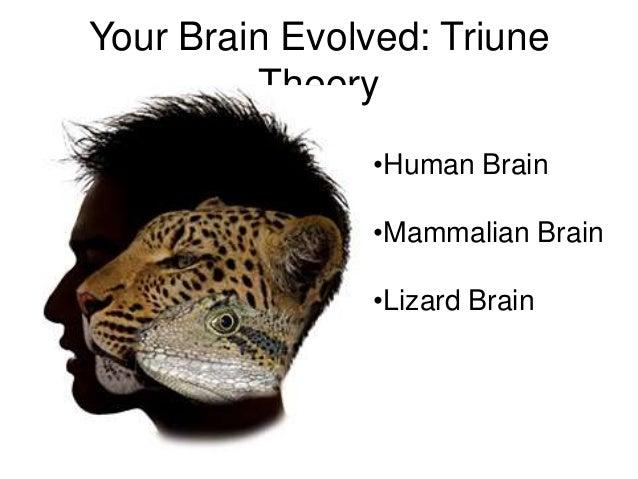 Basic anatomy of brain