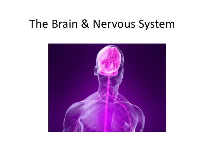 The Brain & Nervous System