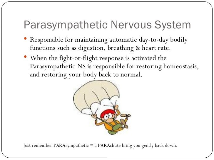 sympathetic nervous system function pdf
