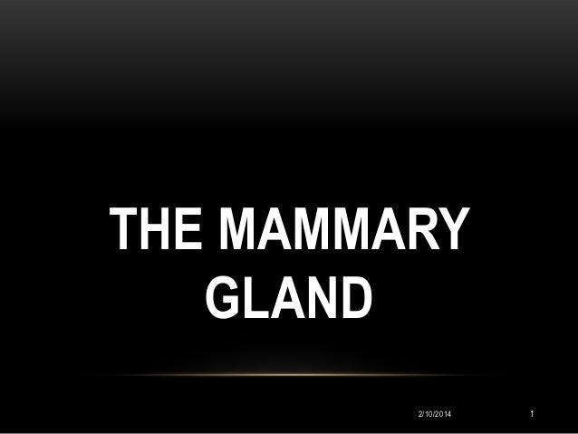THE MAMMARY GLAND 2/10/2014  1