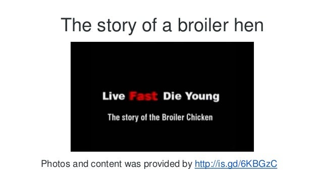 The story of a broiler hen  Photos and content was provided by http://is.gd/6KBGzC
