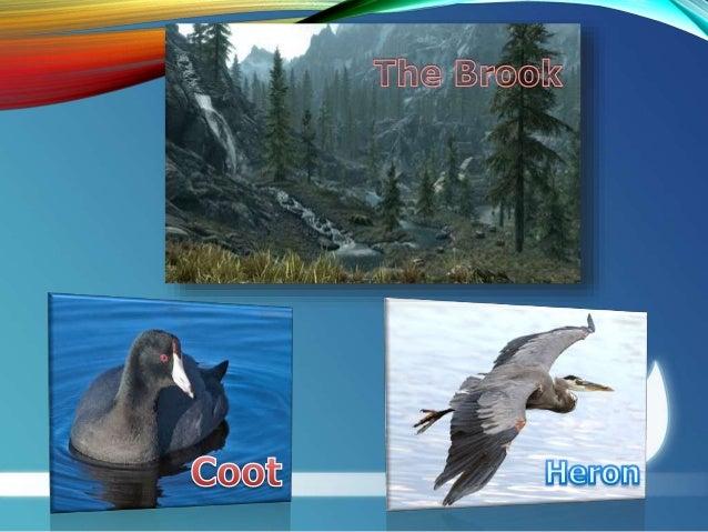 the brook poem short summary