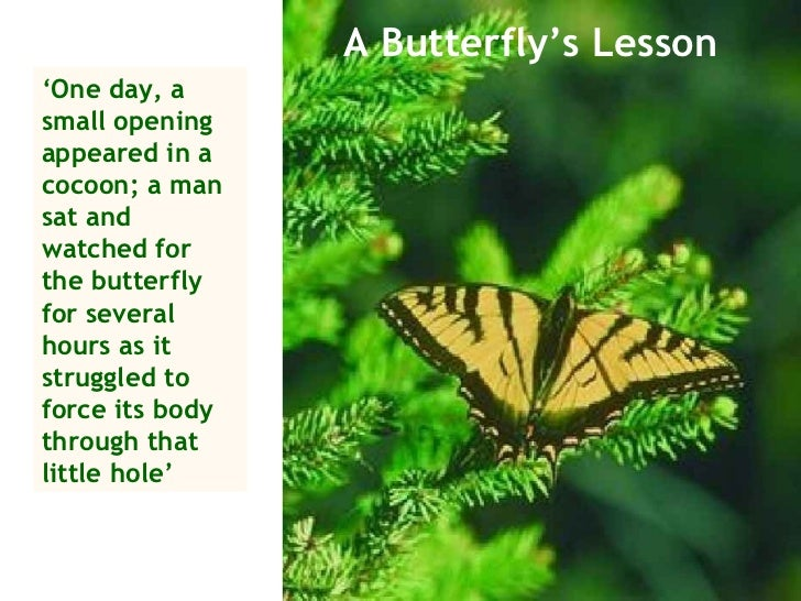 A Butterfly's Lesson ' One day, a small opening appeared in a cocoon; a man sat and watched for the butterfly for several ...