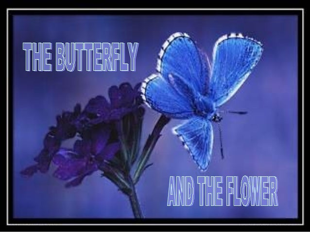 Once there was a man who asked God fora flower........and a butterfly.