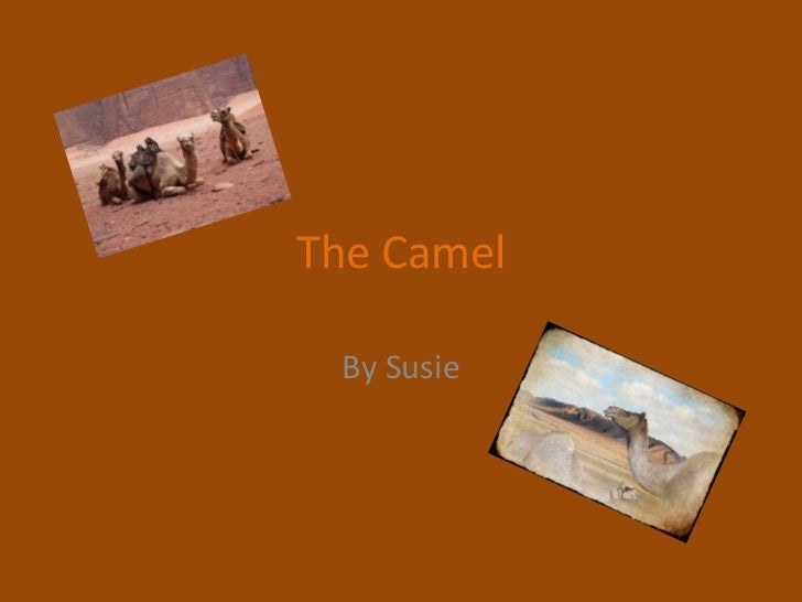 The Camel<br />By Susie<br />