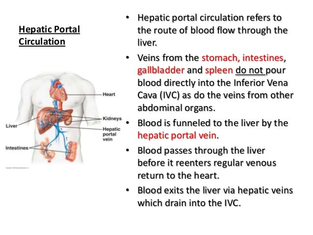 Anatomy and Physiology The cardiovascular system