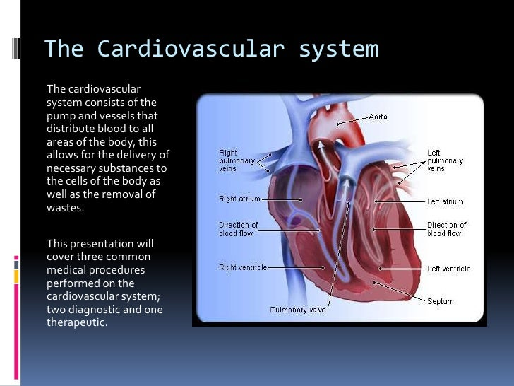 The Cardiovascular System 3 Procedures