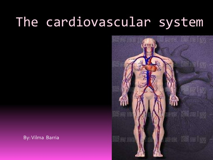 The cardiovascular system By: Vilma Barria