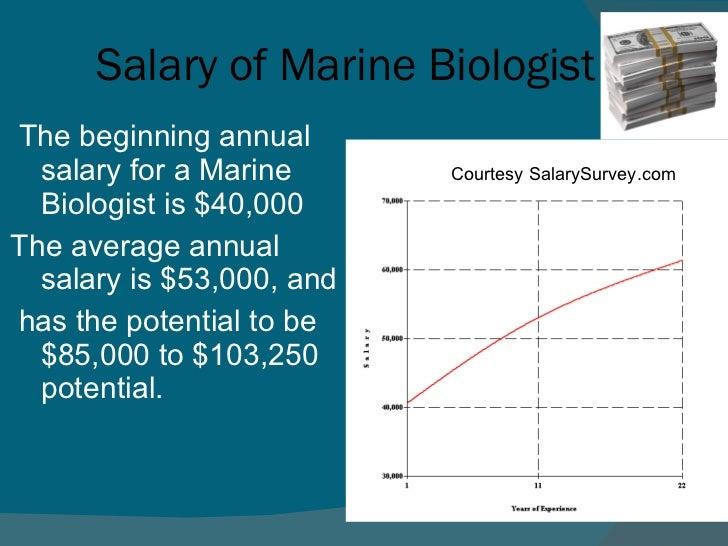 Marine Biologist Career Outlook | Marine World