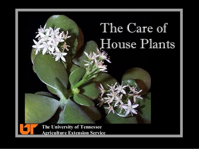 The Care of House Plants The University of TennesseeThe University of Tennessee Agriculture Extension ServiceAgriculture E...