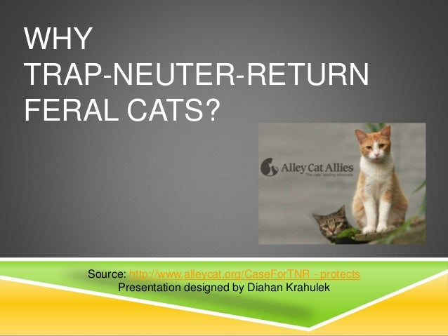 WHY TRAP-NEUTER-RETURN FERAL CATS? Source: http://www.alleycat.org/CaseForTNR - protects Presentation designed by Diahan K...