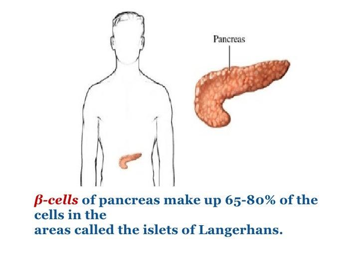 β-cells   of pancreas make up 65-80% of the cells in the  areas called the islets of Langerhans.