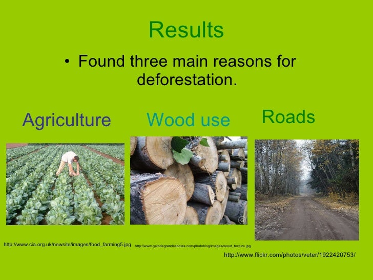 The Causes Of Deforestation