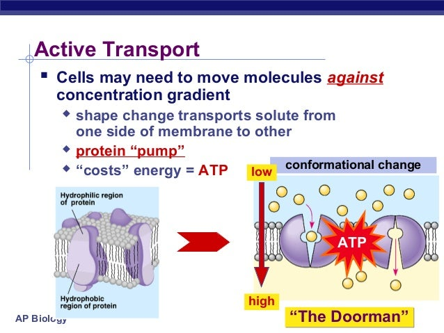 The Cell Membrane A Micro Insight Of Life