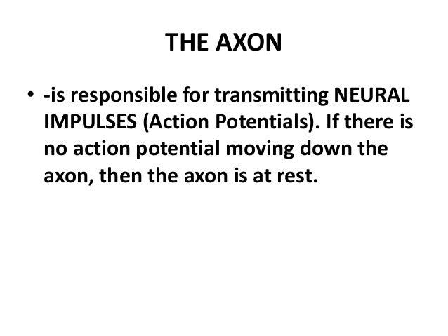 Lesson18:The Central Nervous System & lesson 20:Brain