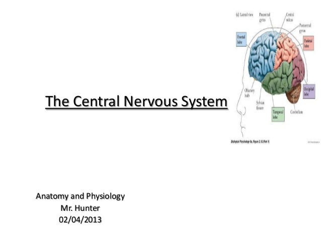The Central Nervous SystemAnatomy and Physiology     Mr. Hunter     02/04/2013