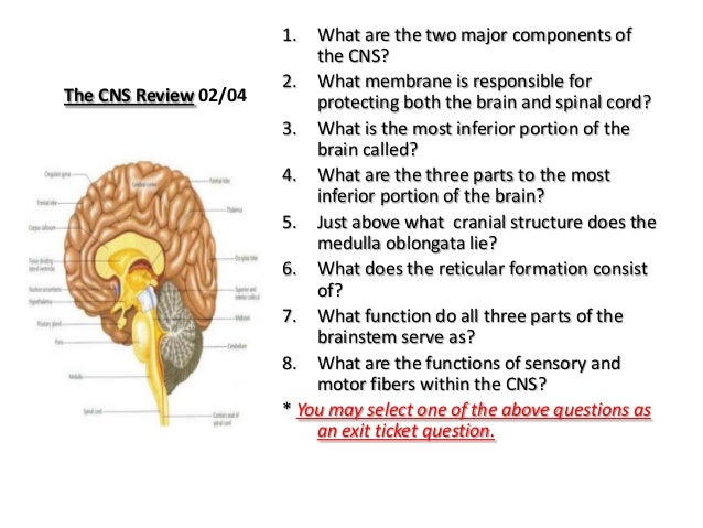 Anatomy And Physiology The Central Nervous System 02 04 2013
