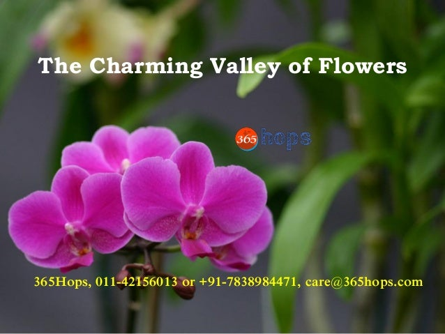 The Charming Valley of Flowers 365Hops, 011-42156013 or +91-7838984471, care@365hops.com