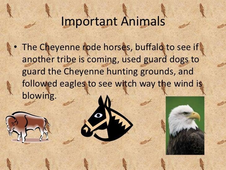 The Cheyenne Tribe